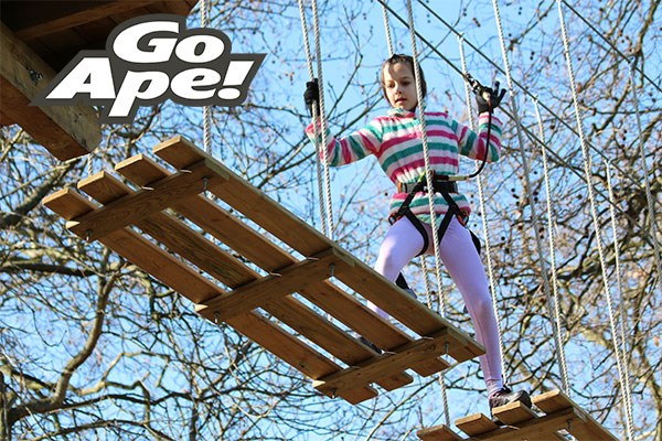Click to view product details and reviews for Junior Tree Top Adventure For One Child At Go Ape.