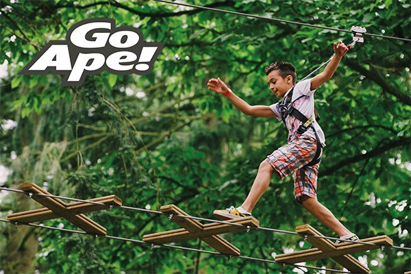 Junior Tree Top Adventure For One At Go Ape