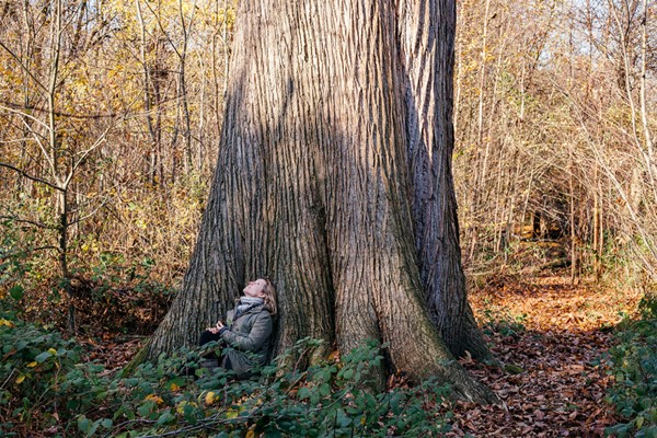 Four Hour Forest Bathing For One