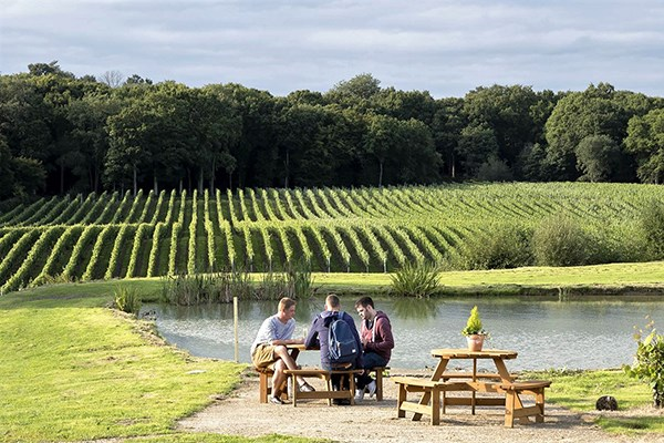 Wine Or Beer Tasting For Two With Vineyard And Brewery Tours