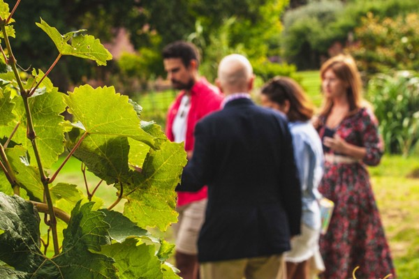Vineyard Tour And Wine Tasting At Chilford Hall For Two