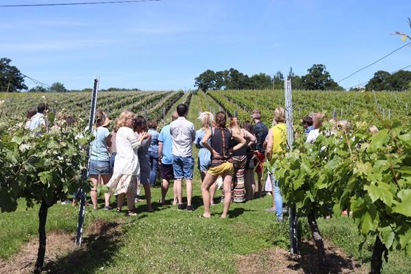 Wine Tasting Tour For Two At English Oak Vineyard