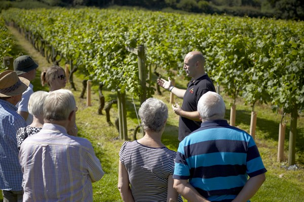 Vineyard Tour With Lunch Platter For Two At Yorkshire Heart Vineyard And Brewery