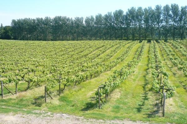 Vineyard Tour And Tasting Experience For Two At Hidden Spring Vineyard