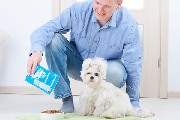 Online Pet First Aid Course For One