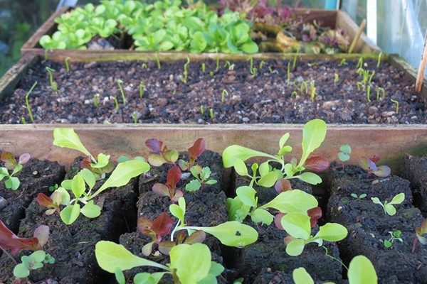Online Self Sufficient Vegetable Gardening Course In A Virtual Classroom For One
