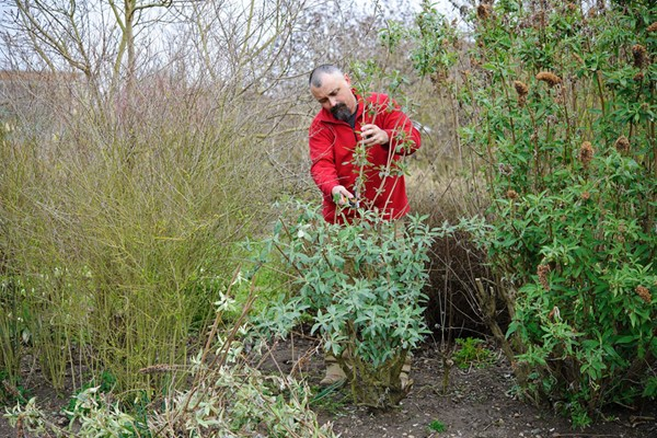 Online Essential Pruning For Gardeners Course In A Virtual Classroom