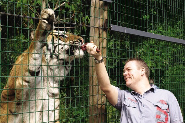 Feed The Big Cats By Hand At Paradise Wildlife Park - Weekdays
