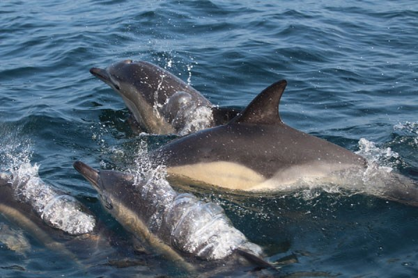 Dolphin Watching For One