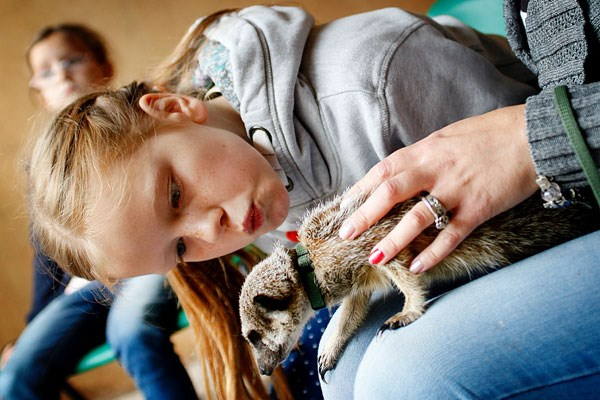 2 For 1 Meerkat Experience For Two At Hoo Farm Animal Kingdom