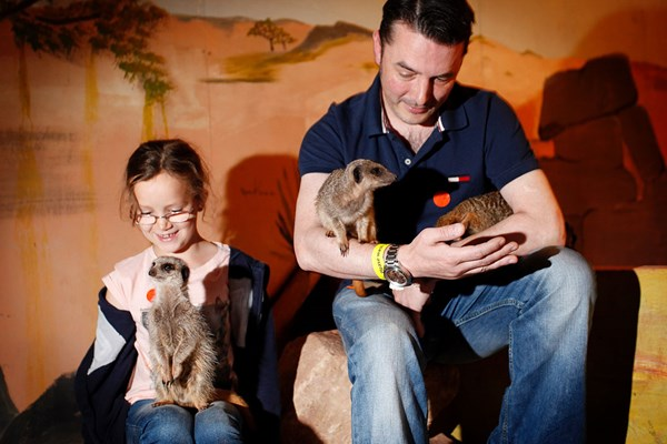 Meerkat Experience For Two Adults And Two Children At Hoo Farm Animal Kingdom