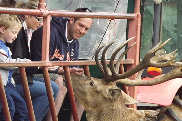 A Day On The Farm With A Deer Safari For Two Adults At Snettisham Park