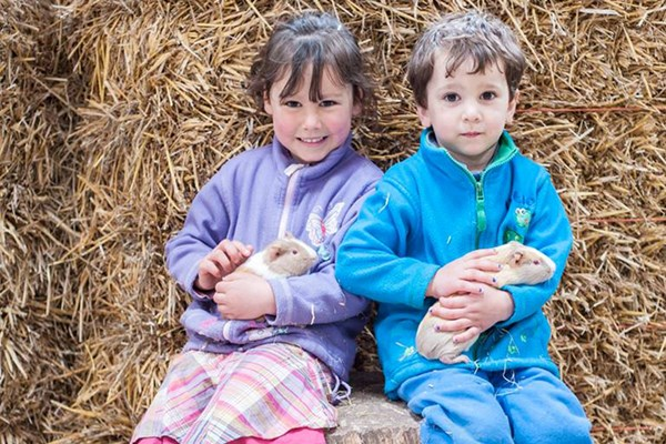 Farm Tour With Animal Handling For Two At Thornton Hall Country Park