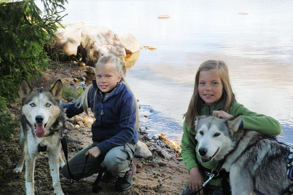Husky Dog Sledding Experience For One At Dorchar Aile