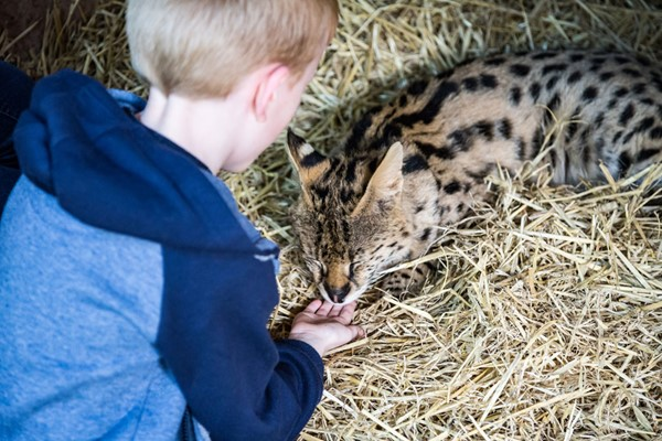 A Choice Of One Hour Animal Experience For Two At Hoo Farm Animal Kingdom
