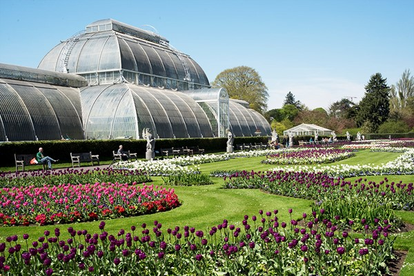 Kew Gardens Admission With Private Guided Walking Tour For Two