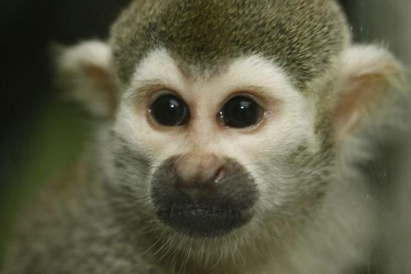 Shadow a Monkey Keeper Experience at Paradise Wildlife Park