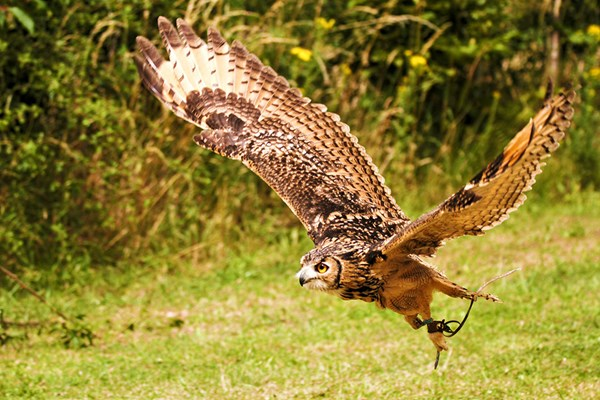 Two Hour Birds Of Prey Experience For One At Cjs Birds Of Prey